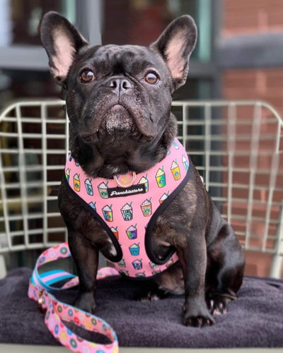 Frenchiestore health harness for small dogs