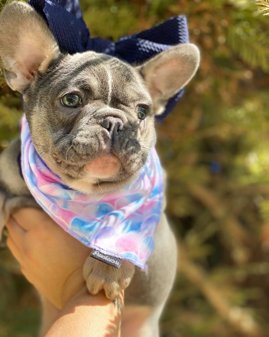 Frenchiestore Pet Head Bow | Midnight