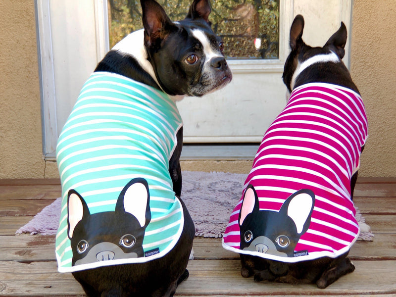 Frenchie Shirt | Frenchiestore | Bouledogue Français Noir en Aigue-Marine