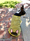 Cute boston terrier wearing frenchie shirt