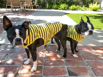 Boston Terrier dog shirts