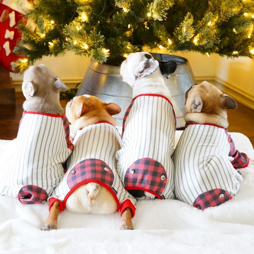 French Bulldog Pajamas | Frenchie Clothing | Buffalo Plaid, Frenchie Dog, French Bulldog pet products