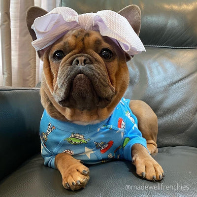Frenchie dog bow