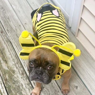 Frenchie dog shirt bumble bee
