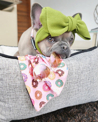 Frenchie bow in green