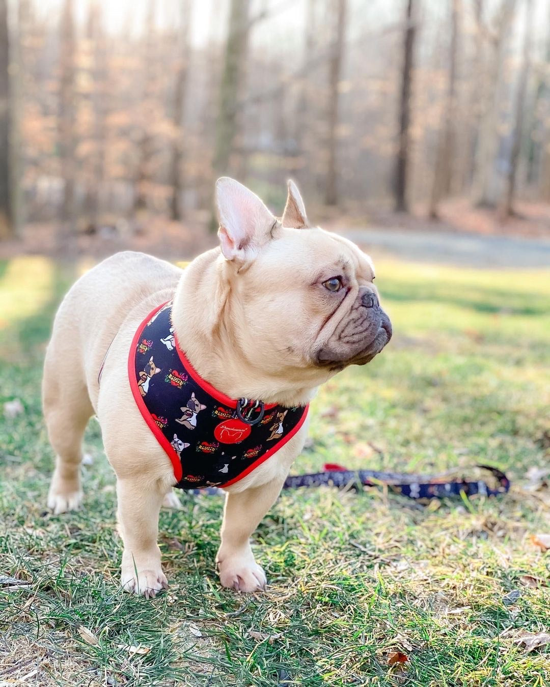 Frenchiestore Reversible Dog Health Harness | Puppy Love, Frenchie Dog, French Bulldog pet products