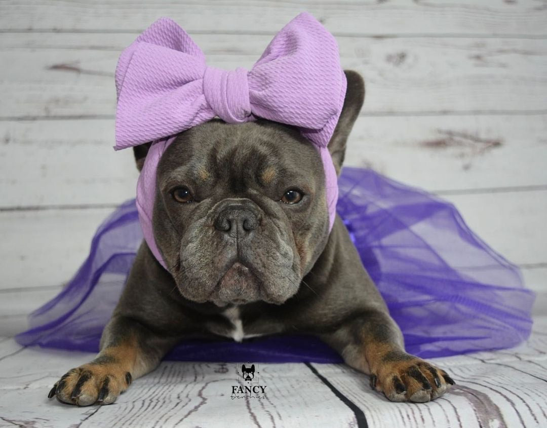 Frenchiestore Pet Head Bow | Lavender