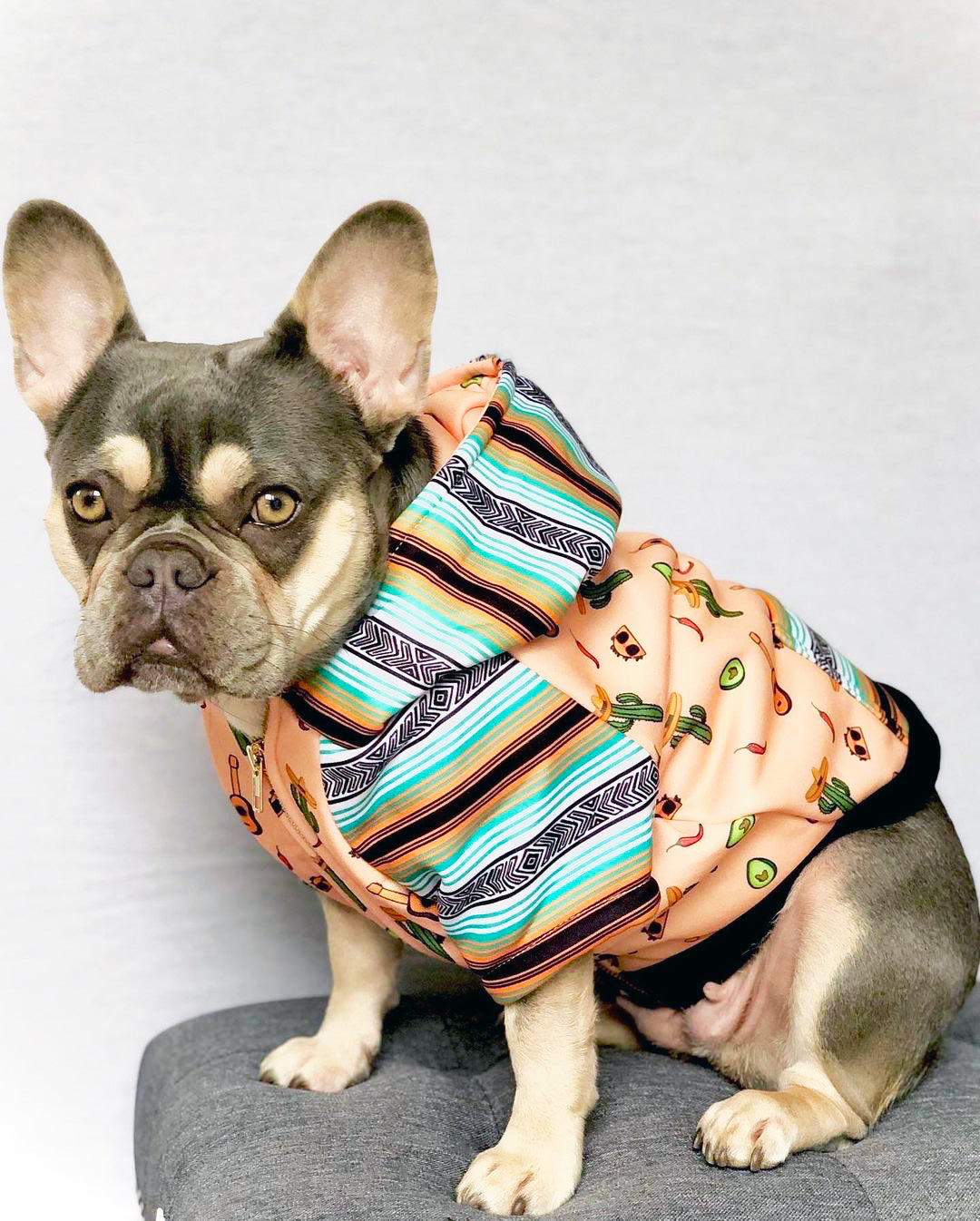 Frenchiestore Organic Dog hoodie | Livin' La Vida Frenchie, Frenchie Dog, French Bulldog pet products