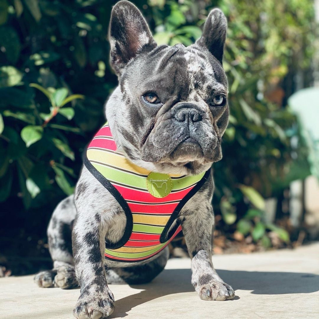 Frenchiestore Reversible Dog Harness | Apple