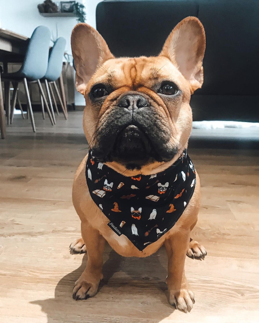 Frenchiestore Dog Cooling Bandana | Harry Pupper