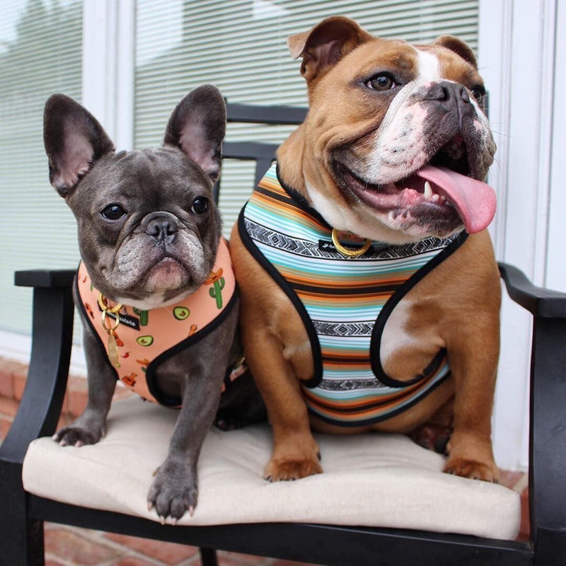 French Bulldog Harness | Versatile Health Harness | Livin' La Vida Frenchie