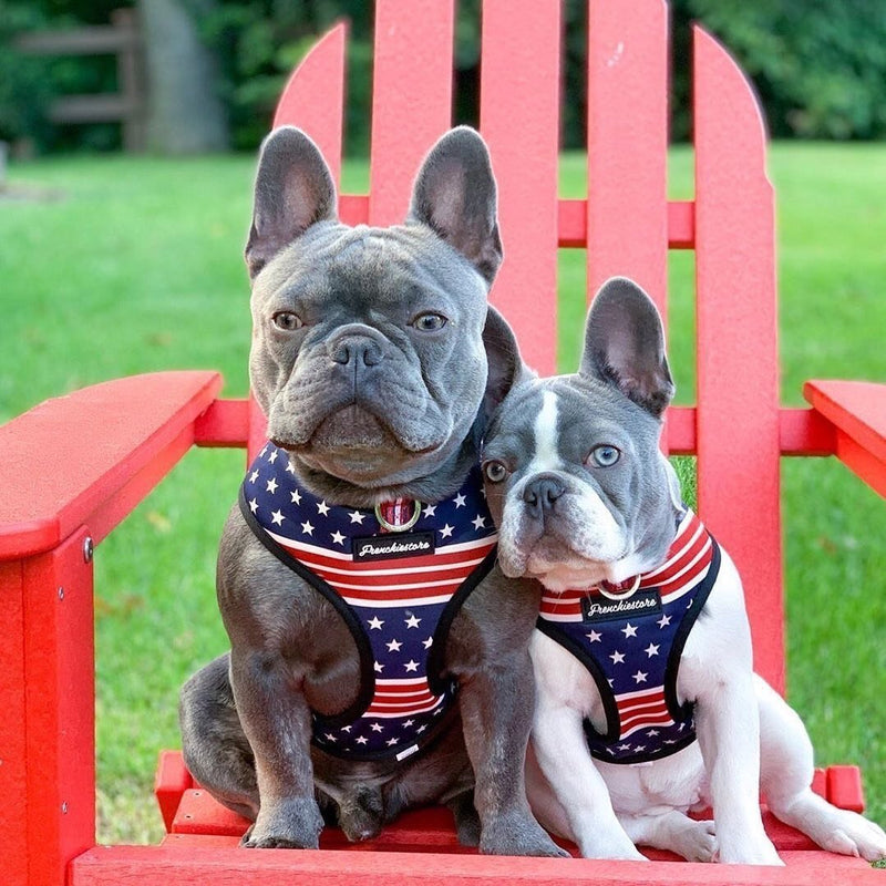 Dual D Ring dog health harness made by Frenchiestore with United States flag artwork