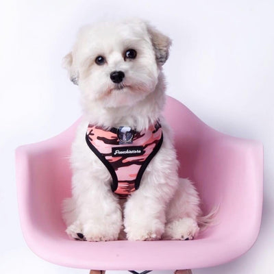 fluffy white dog wearing pink camo dog harness