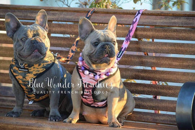 Frenchiestore health Harness