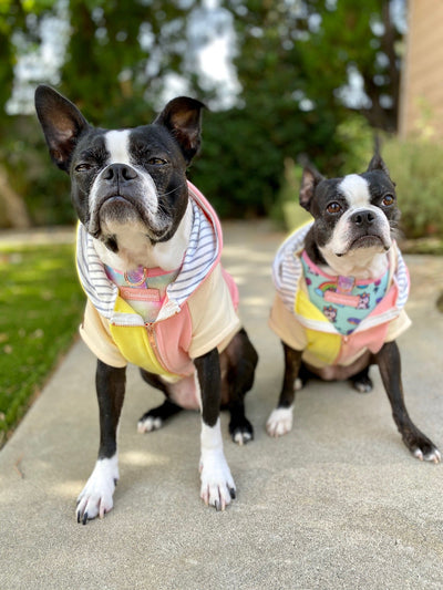 dog hoodies for Boston Terriers dog breed