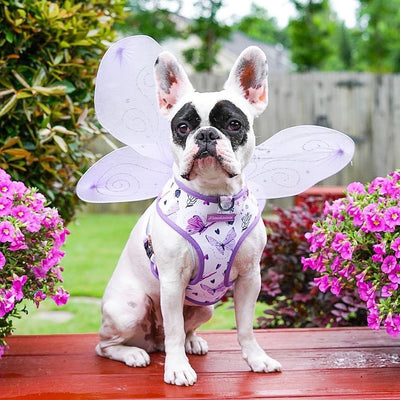 Magical Butterfly French Bulldog dog harness