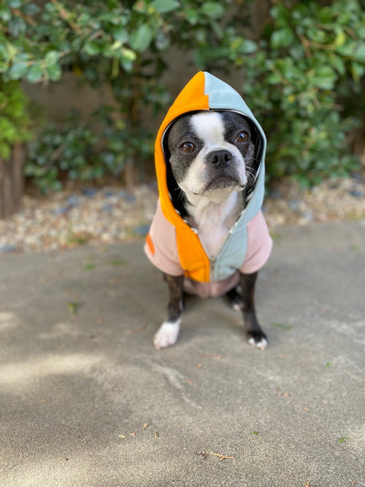 Boston Terrier organic dog clothing
