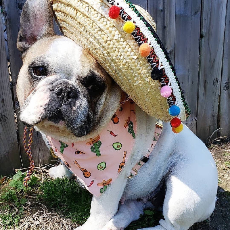 Frenchiestore strap harness tacos
