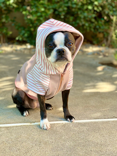 Sweat à capuche Boston Terrier pour chien