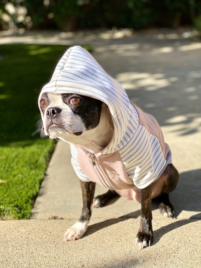 Boston terrier dog hoodie