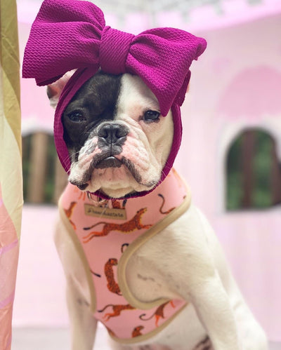 Cute Frenchie girl with headbow