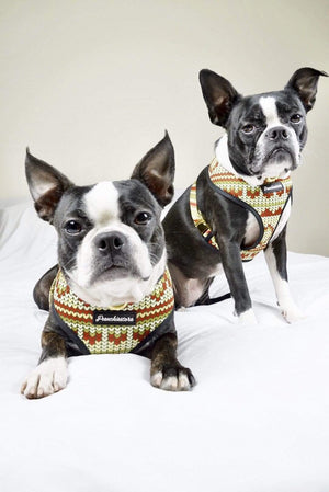 2 Boston Terrier dogs modeling Frenchiestore dog harness christmas design