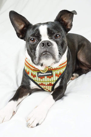 Boston Terrier dog wearing usa dog harness with dual d rings christmas design