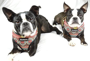 2 Boston Terrier dogs modeling Frenchiestore harness christmas design