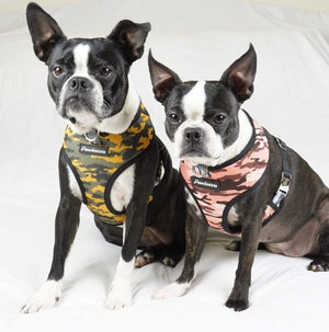 2 Boston Terrier dogs wearing Frenchiestore dog harness in camo