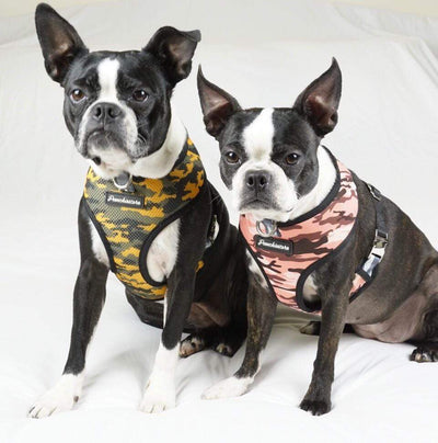 Boston Terrier dog harness in camo