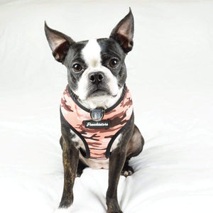 Boston Terrier dog wearing pink camo dog harness with dual d rings