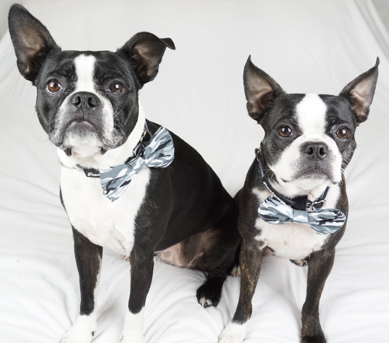 Frenchiestore Breakaway Hundehalsband | Gray Ultimate Camo