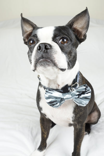 Boston Terrier tragen Frenchiestore Hund Bowtie in blau Camo