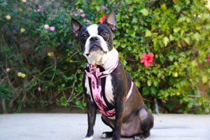 Frenchiestore Adjustable Health Harness | Pink Camo