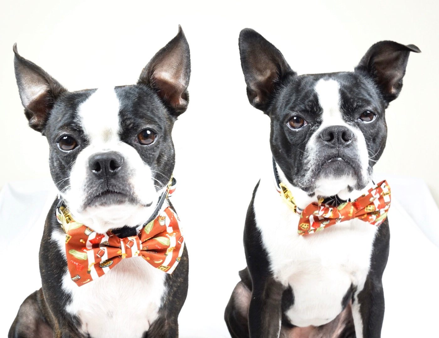 Frenchiestore dog Bowtie | Game, Frenchie Dog, French Bulldog pet products