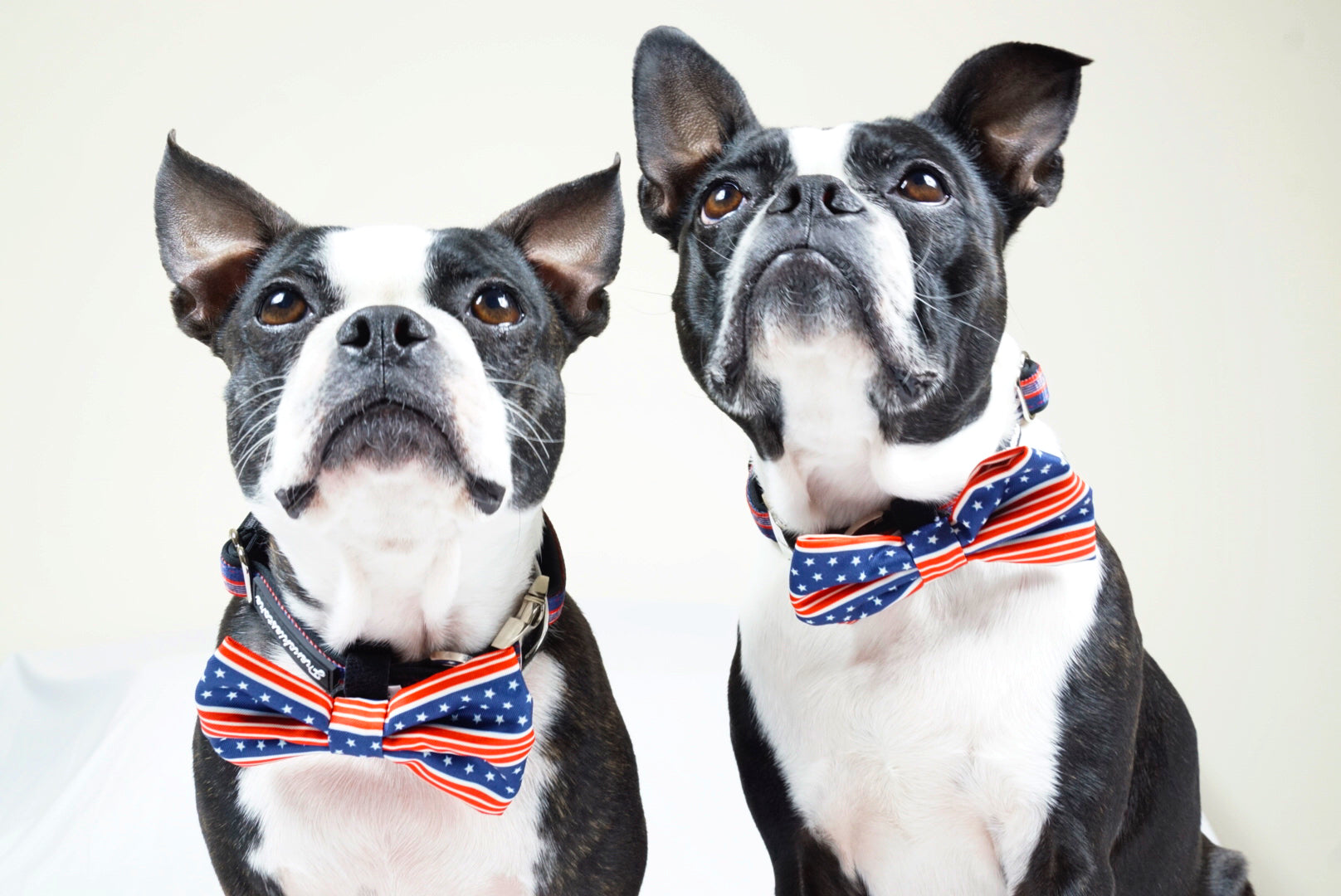 Frenchiestore dog Bowtie | All American, Frenchie Dog, French Bulldog pet products