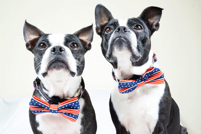 Frenchiestore dog Bowtie | All American