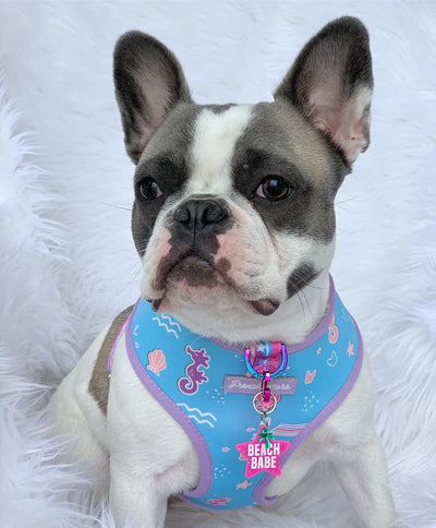 French Bulldog puppies dog harness