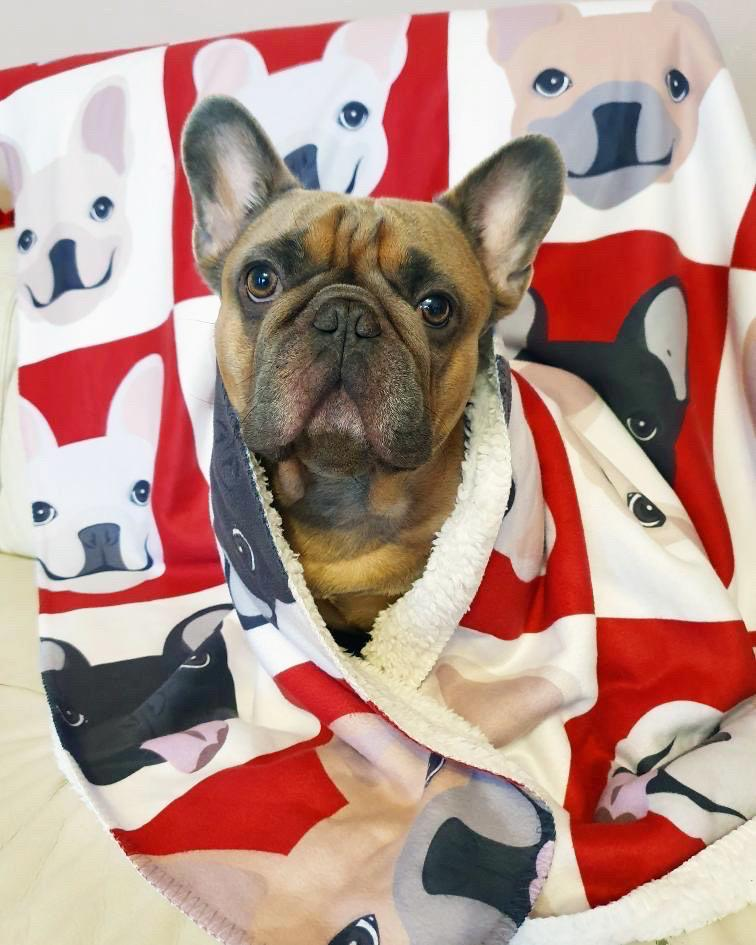 Frenchie Blanket | Frenchiestore | French Bulldogs Wine O'clock