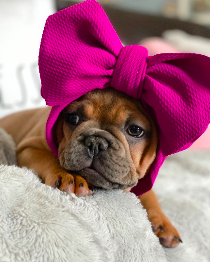 Frenchiestore Pet Head Bow | Beet