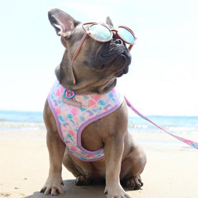 Frenchie Bulldog harness