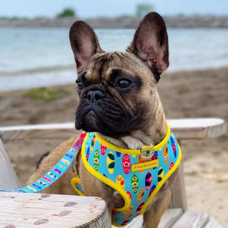 French Bulldog Harness | Versatile Health Harness | California Dreamin'