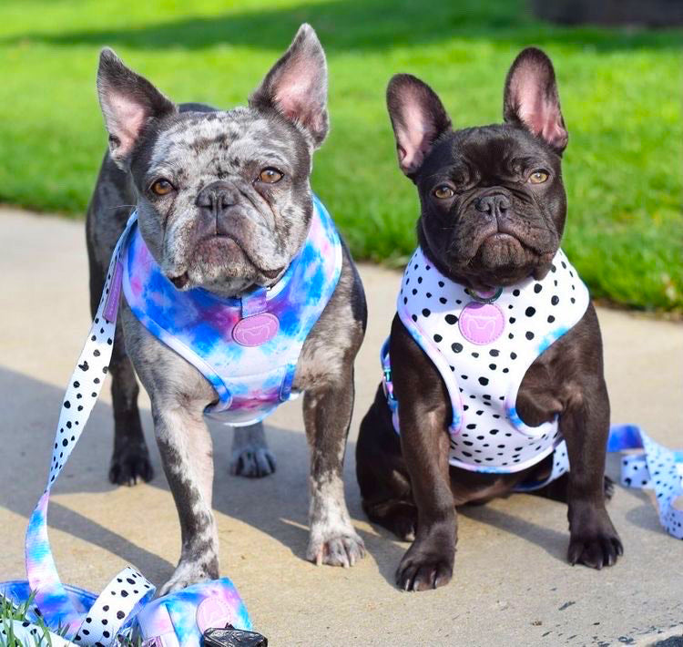 Frenchiestore Reversible Dog Health Harness | 101 Dalmatians, Frenchie Dog, French Bulldog pet products