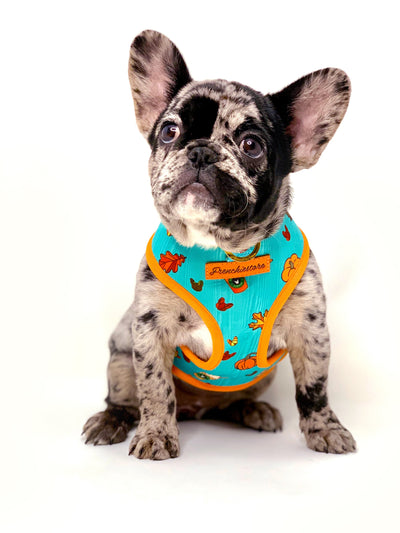 frenchie puppy dog harness