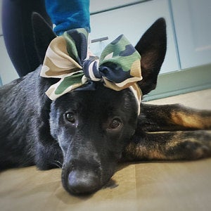 Frenchiestore Pet Head Bow | Camo, Frenchie Dog, French Bulldog pet products