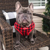 Frenchie dog in red buffalo plaid Frenchie store harness