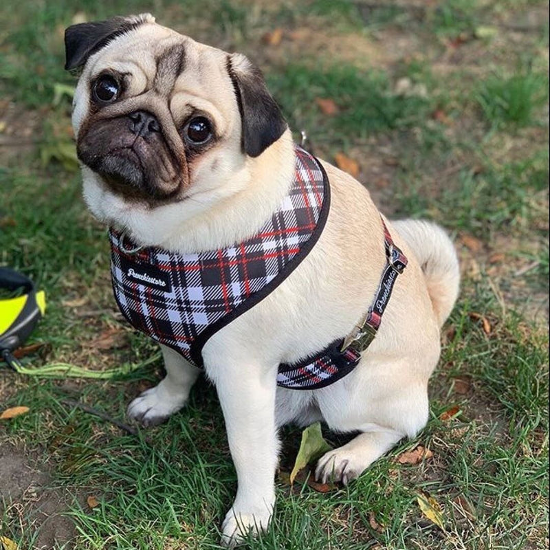 French Bulldog Harness | Versatile Health Harness | Tartan