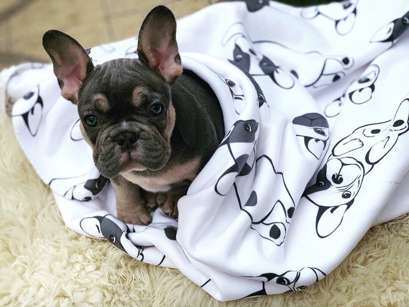 Frenchie Blanket | Frenchiestore | French Bulldogs on Black & White