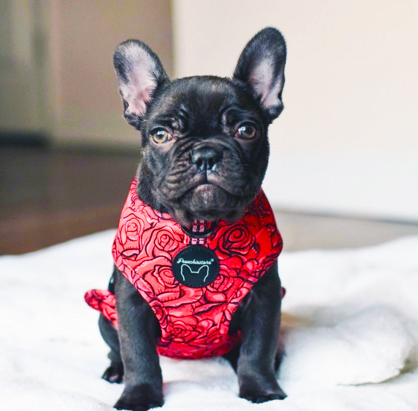 Frenchiestore Reversible Dog Health Harness | Lips & Roses, Frenchie Dog, French Bulldog pet products