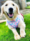 Labrador Retriever dog no pull harness